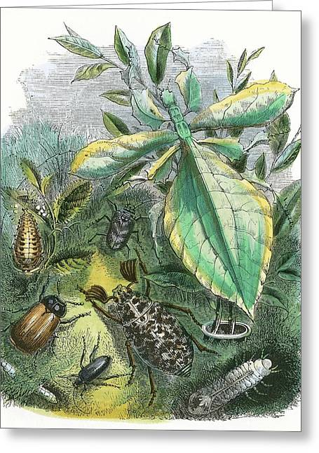 The Butterfly Vivarium Greeting Card by English School
