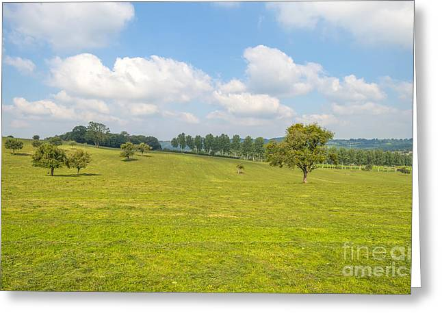 Limburg Greeting Cards - Trees in a meadow in summer Greeting Card by Jan Marijs