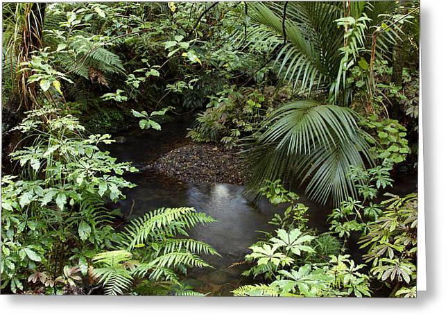 Tropics Photographs Greeting Cards - Tropical forest Greeting Card by Les Cunliffe