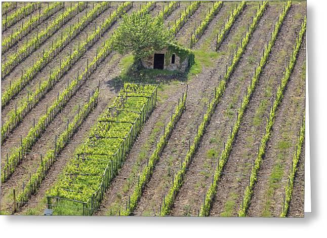 Vines Greeting Cards - Tuscany - Montalcino Greeting Card by Joana Kruse