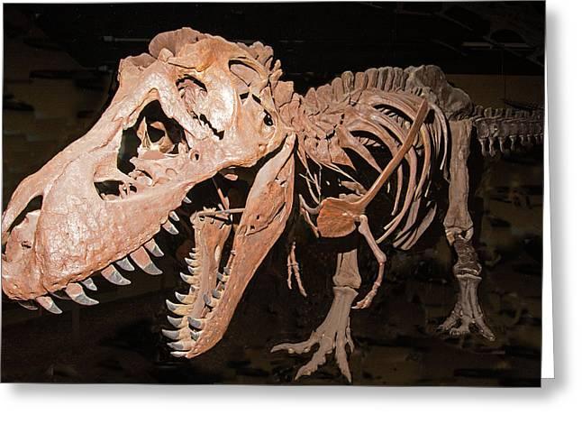 Bipedal Greeting Cards - Tyrannosaurus Rex Greeting Card by Millard H Sharp