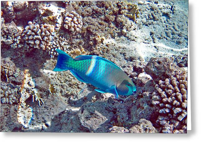 Fish Digital Art Greeting Cards - Underwater World. Greeting Card by Andy Za