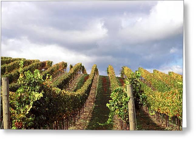 Napa Valley Vineyard Greeting Cards - Vineyard, Napa Valley, California, Usa Greeting Card by Panoramic Images