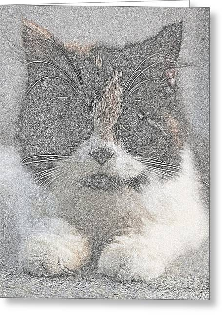 Water Jars Greeting Cards - Cats Greeting Card by Nuriyah