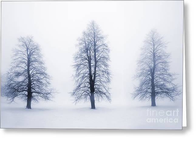 Bare Trees Greeting Cards - Winter trees in fog Greeting Card by Elena Elisseeva