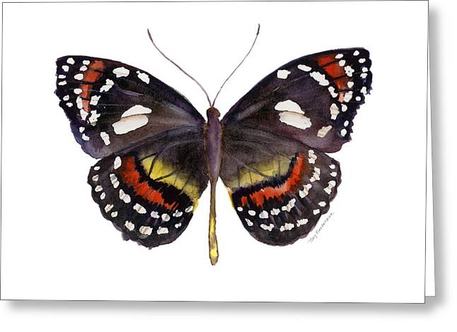 Background Paintings Greeting Cards - 50 Elzunia Bonplandii Butterfly Greeting Card by Amy Kirkpatrick