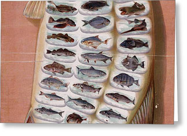 50 Fish from American Waters Greeting Card by Nomad Art And  Design