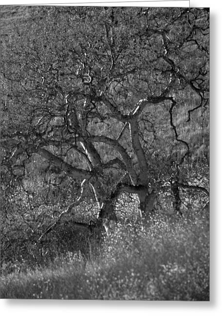 Atascadero Greeting Cards - 50 Shades of Gray Trees Greeting Card by Deprise Brescia