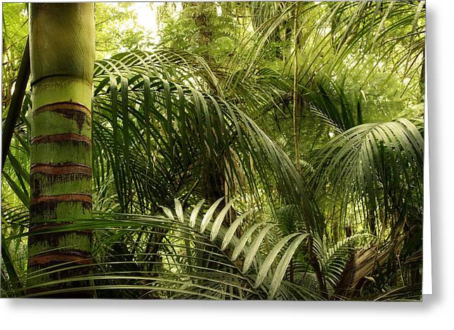 Humidity Greeting Cards - Jungle Greeting Card by Les Cunliffe