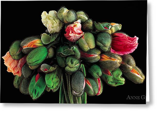Beautiful Florals Greeting Cards - Untitled Greeting Card by Anne Geddes