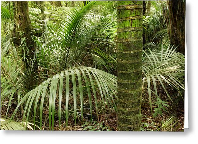 Humid Greeting Cards - Jungle Greeting Card by Les Cunliffe