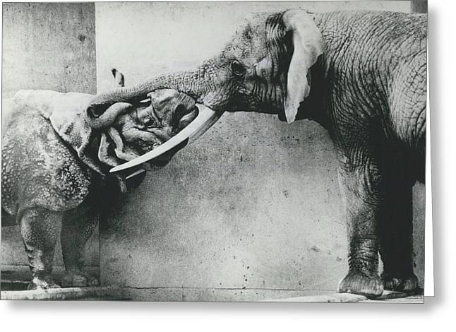 Retro Photography Greeting Cards - Rhino and Elephant Greeting Card by Retro Images Archive