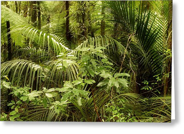 Rain Forests Greeting Cards - Jungle Greeting Card by Les Cunliffe
