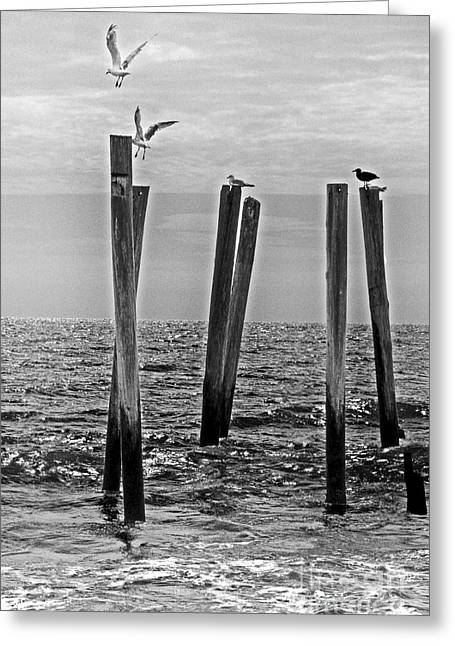 Surf City Greeting Cards - 59TH Street Pier With Seagulls Greeting Card by Tom Gari Gallery-Three-Photography