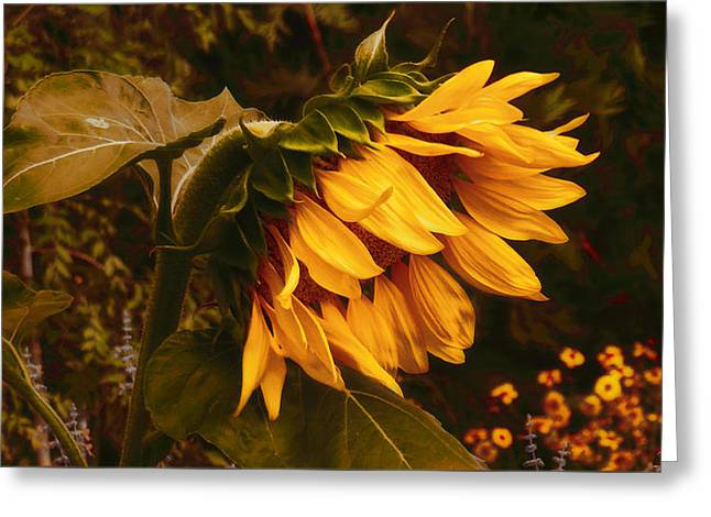 Yellow Sunflower Greeting Cards - 5am Wake Up Call Greeting Card by Douglas MooreZart