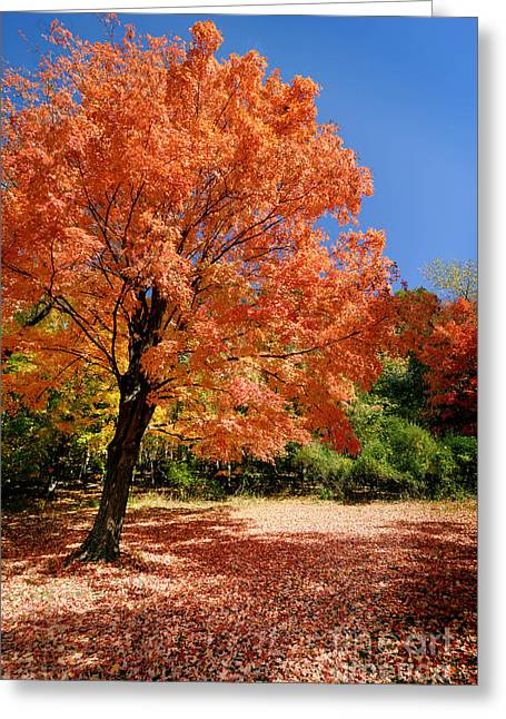 Seasons Greeting Cards - A Blanket of Fall Colors Greeting Card by Amy Cicconi