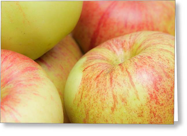 Granny Greeting Cards - Apples Greeting Card by Tom Gowanlock