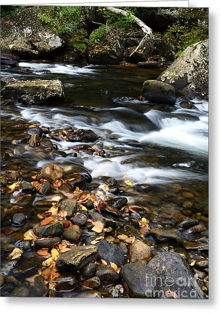 Rushing Stream Greeting Cards - Autumn along Cranberry River Greeting Card by Thomas R Fletcher