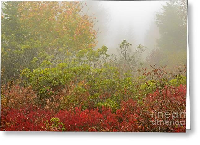Sod Greeting Cards - Autumn Fog Dolly Sods Greeting Card by Thomas R Fletcher