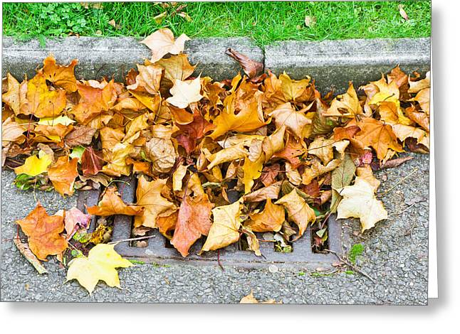 Kerb Greeting Cards - Autumn leaves Greeting Card by Tom Gowanlock