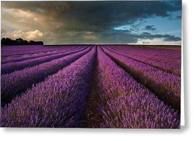 Lavandula Greeting Cards - Beautiful lavender field landscape with dramatic sky Greeting Card by Matthew Gibson