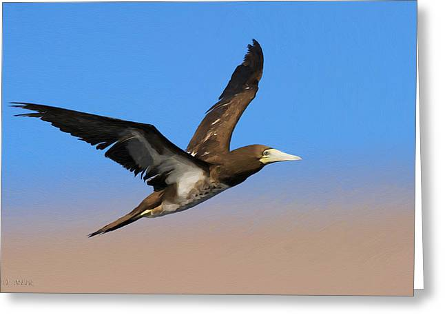 Brown Booby Greeting Cards - Brown Booby Greeting Card by Avi Meir