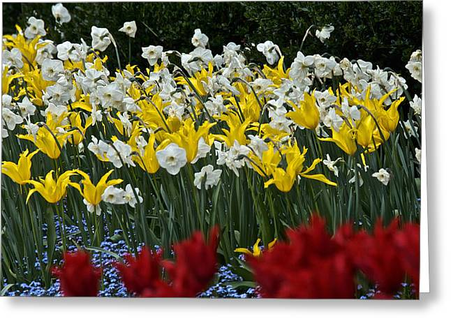 Yellow Dog Greeting Cards - Butchart Gardens Greeting Card by Steven Lapkin