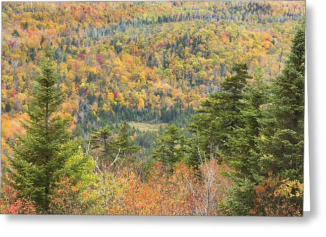 Maine Landscape Greeting Cards - Colorful Fall Forest Near Rangeley Maine Greeting Card by Keith Webber Jr