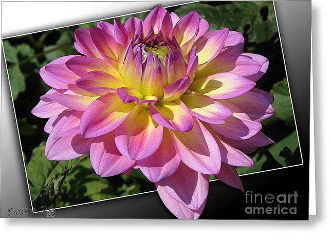 Photos Of Autumn Digital Greeting Cards - Dahlia named Jowey Gipsy Greeting Card by J McCombie