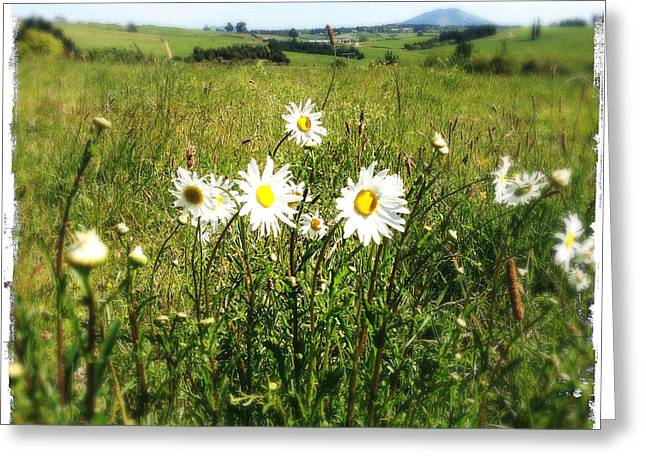 Color Green Greeting Cards - Daisies Greeting Card by Les Cunliffe