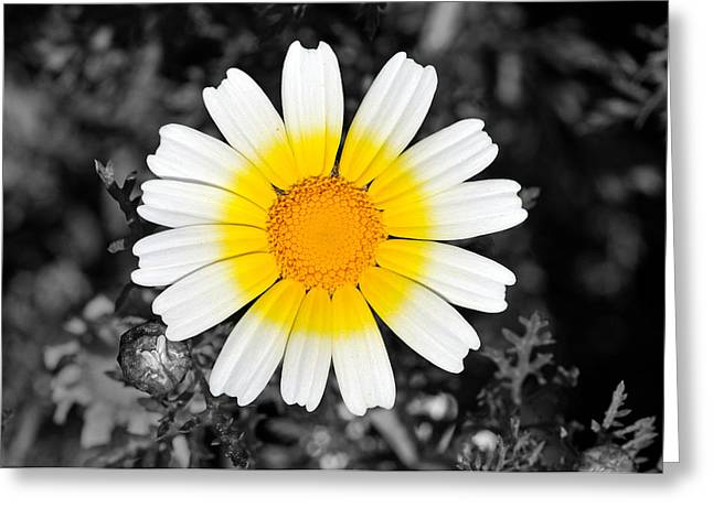 Daisy Greeting Card by George Atsametakis