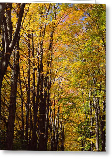 Autumn Colors Greeting Cards - Dirt Road Passing Through A Forest Greeting Card by Panoramic Images