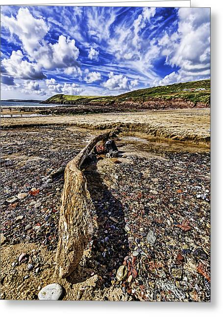 Drifter Photographs Greeting Cards - Driftwood Greeting Card by Steve Purnell