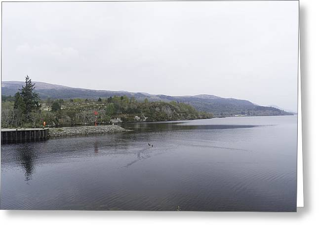 Greenery Greeting Cards - Ducks in a section of Loch Ness near Fort Augustus Greeting Card by Ashish Agarwal