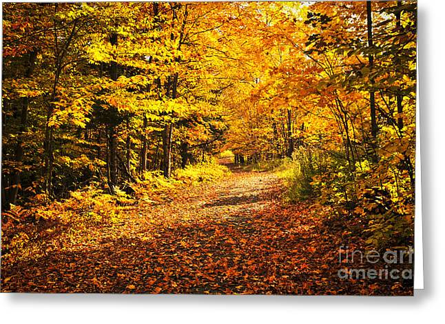 Fruits Photographs Greeting Cards - Fall forest Greeting Card by Elena Elisseeva