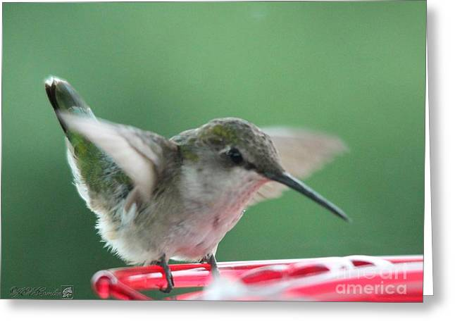 Mccombie Greeting Cards - Female Ruby-Throated Hummingbird Greeting Card by J McCombie
