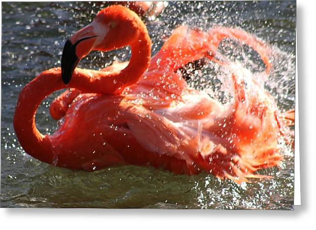 Pure Pyrography Greeting Cards - Flamingo Beauty Greeting Card by Valia Bradshaw