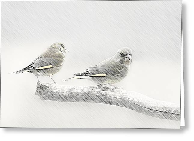Feeding Mixed Media Greeting Cards - Greenfinch  Greeting Card by Heike Hultsch