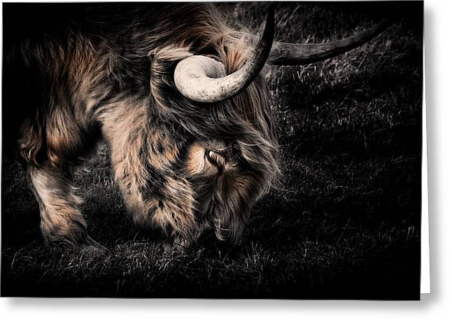 Cow Images Greeting Cards - Highland Cow Greeting Card by Ian Hufton