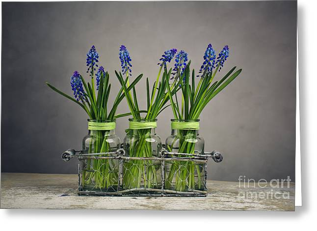 Blue Grapes Greeting Cards - Hyacinth Still Life Greeting Card by Nailia Schwarz