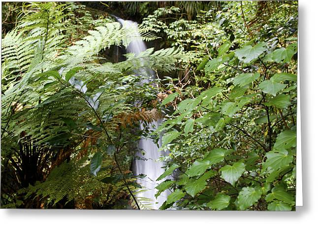 Ecology Greeting Cards - Jungle stream Greeting Card by Les Cunliffe