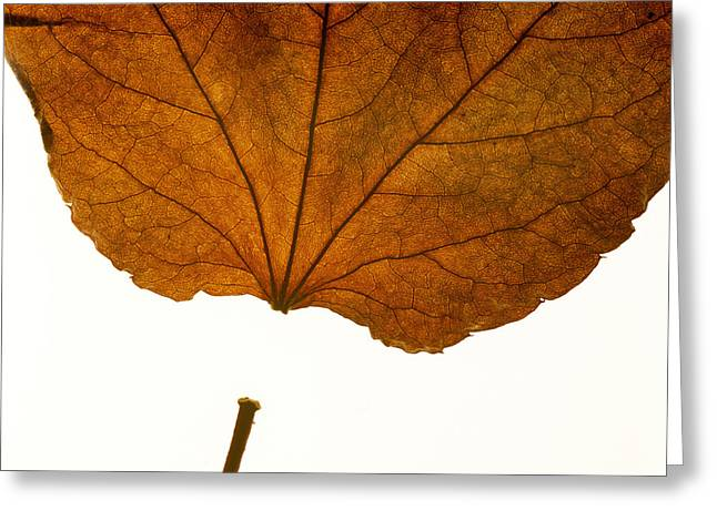 Color Change Greeting Cards - Leaf Greeting Card by Bernard Jaubert