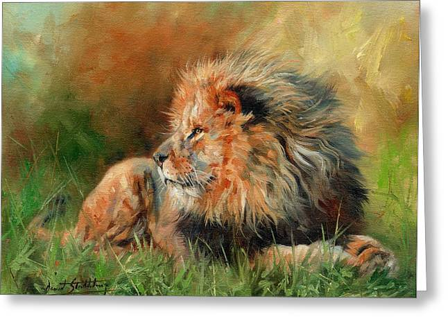Lioness Greeting Cards - Lion Greeting Card by David Stribbling