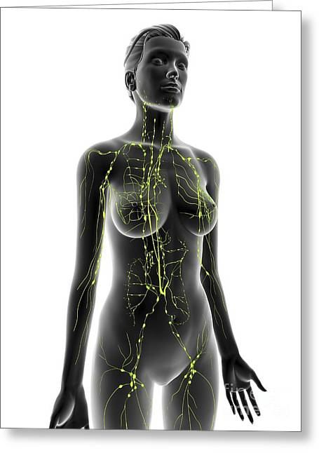 Gland Greeting Cards - Lymphatic System, Artwork Greeting Card by Alfred Pasieka