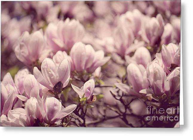 Growing Greeting Cards - Magnolia Flowers Greeting Card by Nailia Schwarz