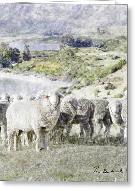 Farming Pastels Greeting Cards - New Zealand Sheep Greeting Card by Tim Mulholland