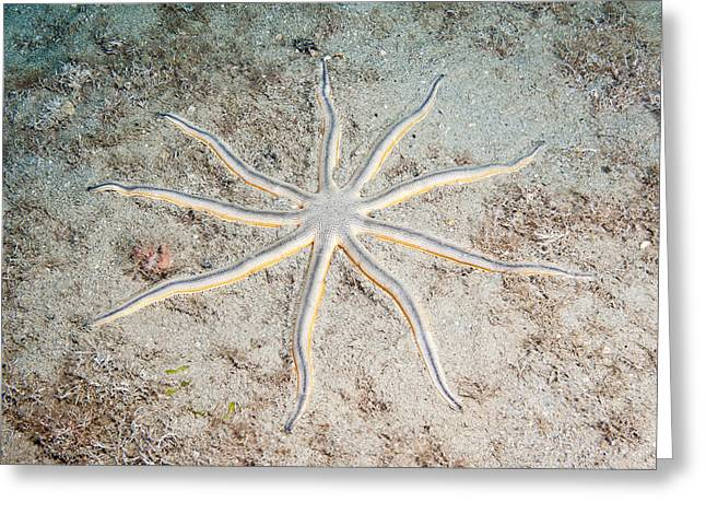 Nine-armed Sea Star Greeting Card by Andrew J. Martinez