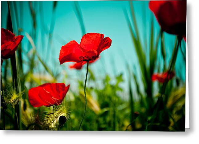 For Sale Pyrography Greeting Cards - Poppy field and sky Greeting Card by Raimond Klavins