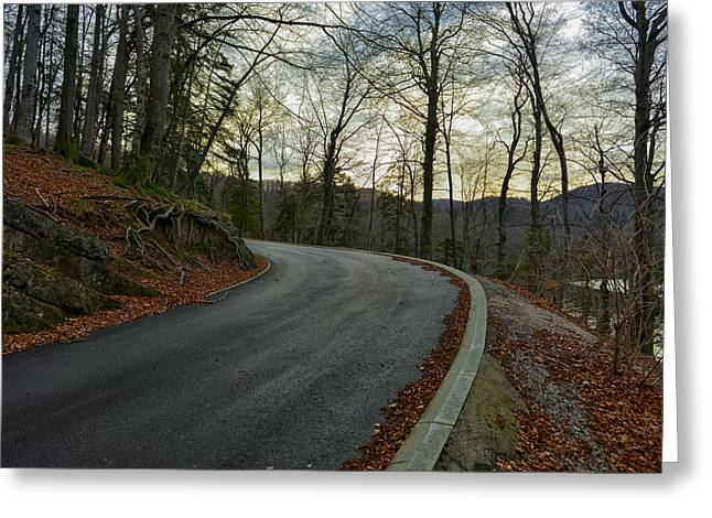 Forest Pyrography Greeting Cards - Road in autumn forest landscape Greeting Card by Oliver Sved