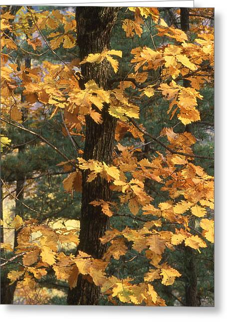 Nature Photographs Greeting Cards - Russian autumn Greeting Card by Anonymous